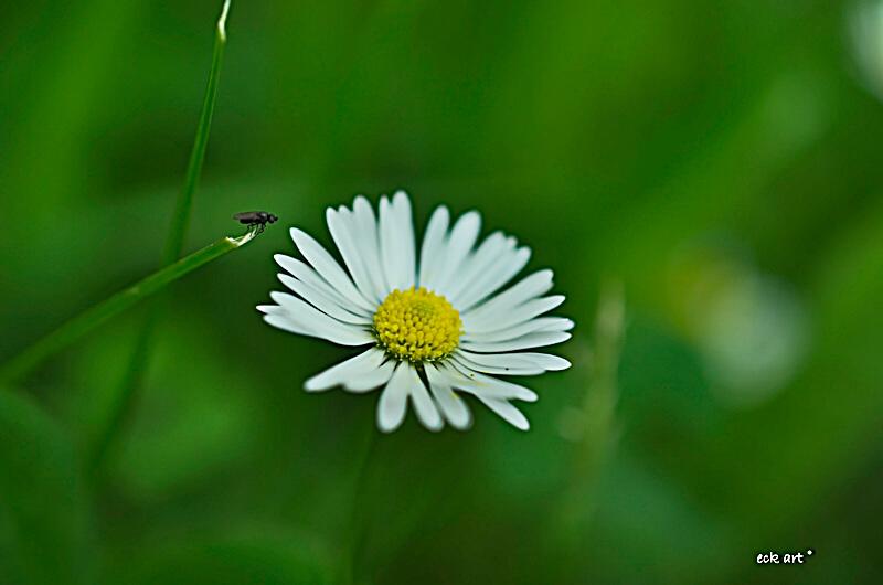 Nachhaltigkeit, Natur,